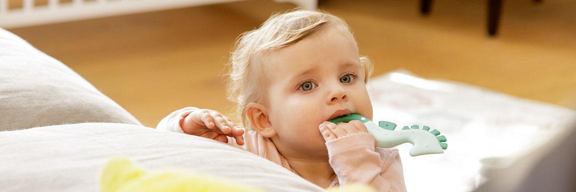 Développement buccal & Anneaux de dentition